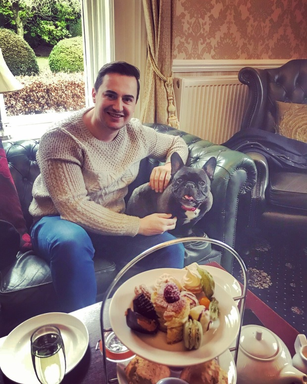 afternoon tea and french bulldog